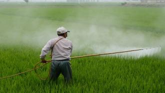 Bacterial remedy for the toxic pesticide Carbaryl