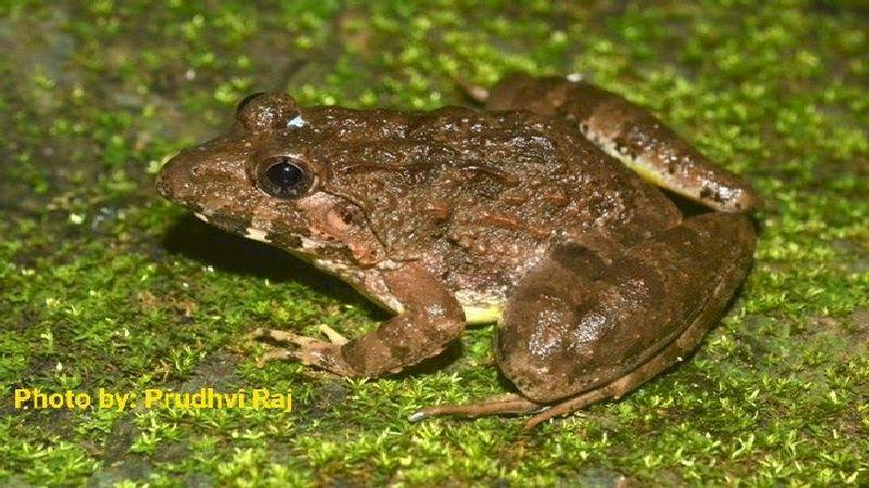 Frog tales: Finding an alter ego a thousand kilometer away