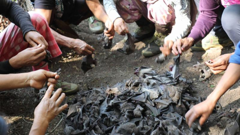 On the edge: Bats in northeast India found to carry filoviruses that could spread to humans