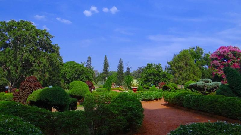 Bengaluru's parks brim with birds and butterflies, finds study
