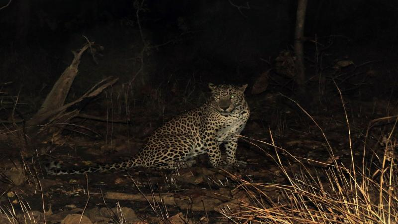 In Gir, not sharing is caring for the lions and leopards