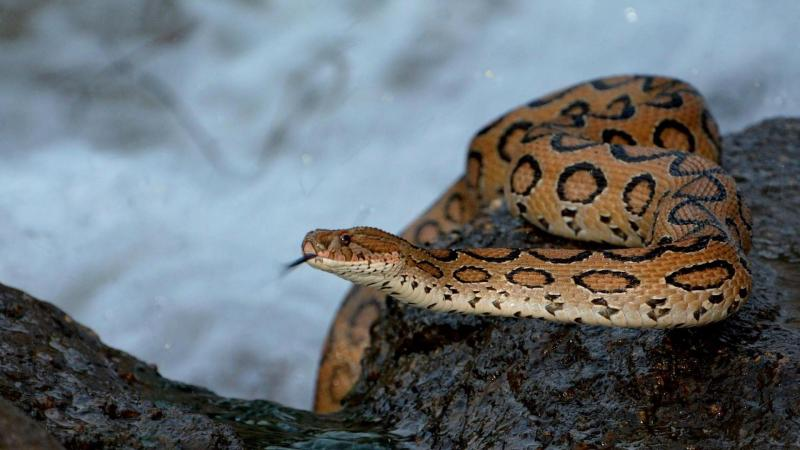 The sorry tale of snakebites in India