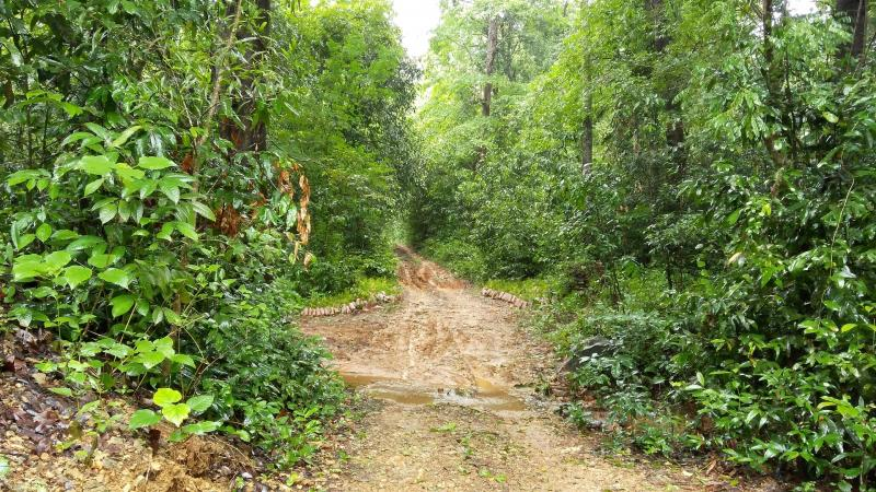 Native forests or single-species plantations: What's better for addressing climate change?