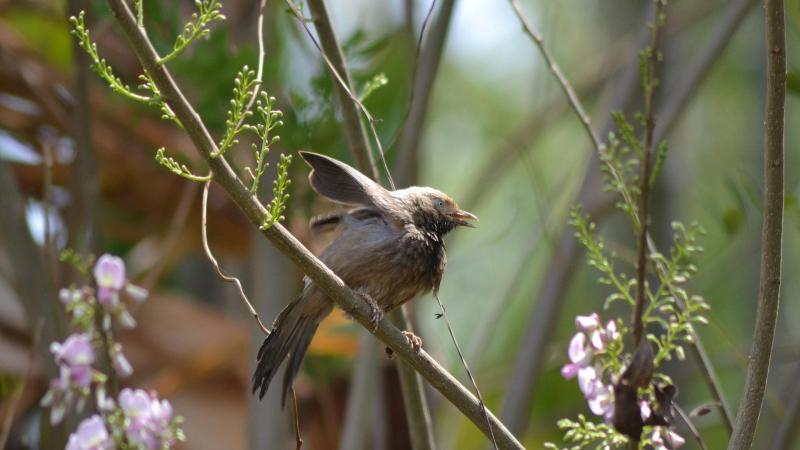 7 Proven Tips for Birdwatching