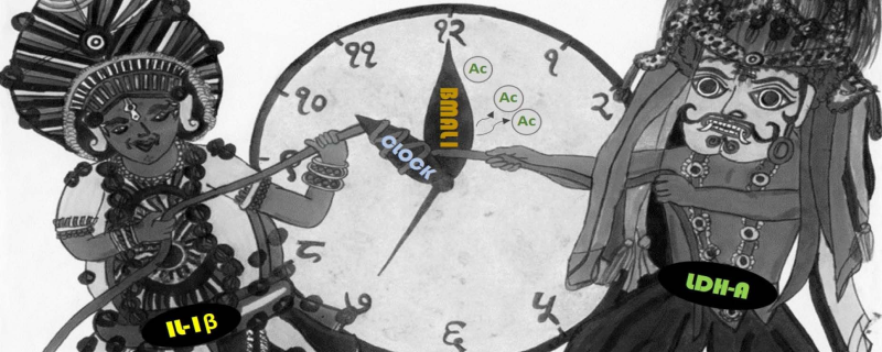 Unlocking the role of biological clock molecules in cancer cells