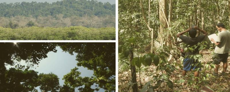 Reduce frequency of forest logging to preserve Andaman's biodiversity, suggest experts