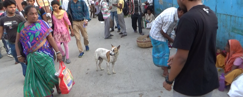 With humans around, dogs on the street tend to be friendlier