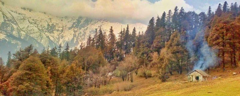 Warming climate is changing the alpine vegetation of the lofty Himalayas