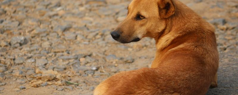 Study explores how free-ranging dogs forage food