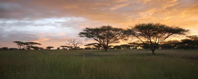 A new mathematical model explains how seed dispersal maintain savanna and forest biomes